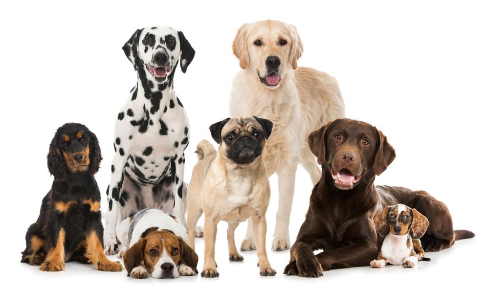 Canileducando - un ciclo di serate per una società a prova di cane